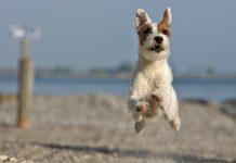 spiagge-per-cani