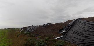 compost-Pontinia