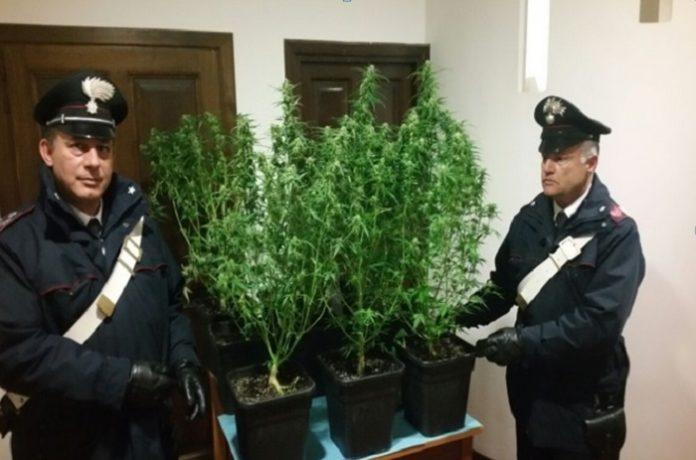 marijuana_san_felice_circeo