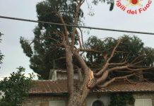 albero-caduto-Terracina