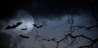 notte-di-halloween