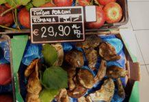 porcini-romeni