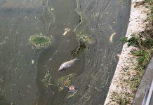 pesci-morti-Parco-San-Marco