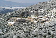 neve-olive-Rocca-Massima