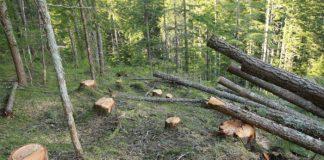 tagliare-alberi