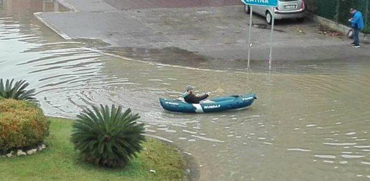 Pontinia canoa