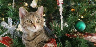 Natale col gatto