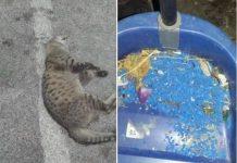 colonia di gatti