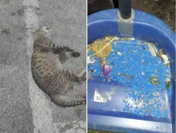 Gaeta Colonia Di Gatti Sterminata E Lombra Del Veleno Per Topi