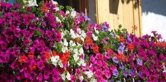 Balconi in fiore