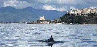 delfini Sperlonga