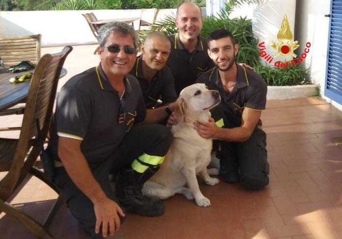 salvataggio cane