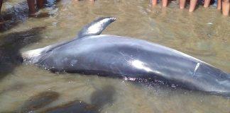delfino Legambiente