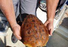 soccorso tartaruga