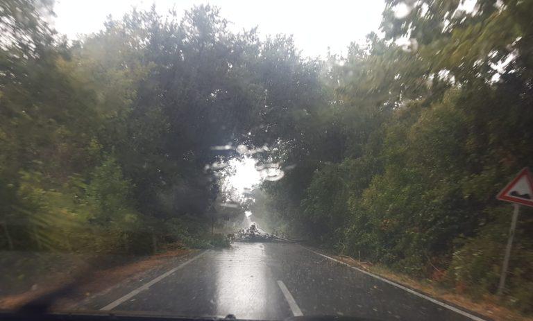 Nubifragio a Bassiano e sui Lepini, grandine e alberi caduti in strada