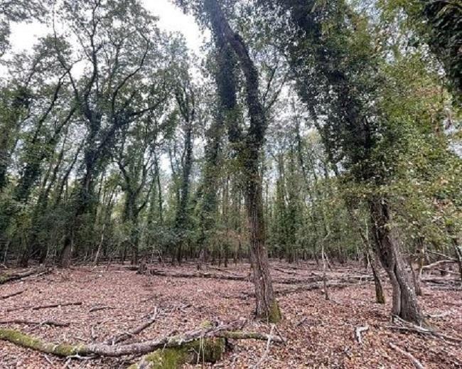 """Parco nazionale del Circeo: """"Necessario ridurre il numero dei daini per salvare la foresta"""""""